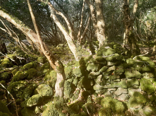 Image is of the wall of stone structure, a small, house. The rocks are covered in moss and hard to tell apart from the rest of the woodland.