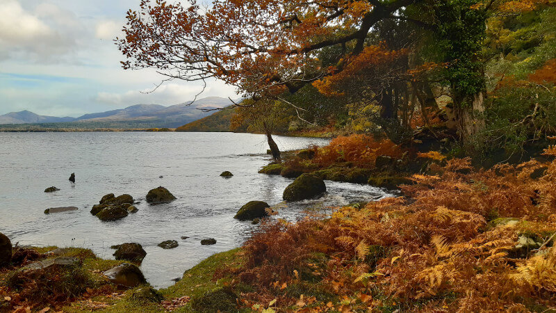 Image is at the shore of Lough Leane. The leaves and ferns are orange, red and gold. The Autumn sky is blue and you can see mountains in the sun over the water of the lake.